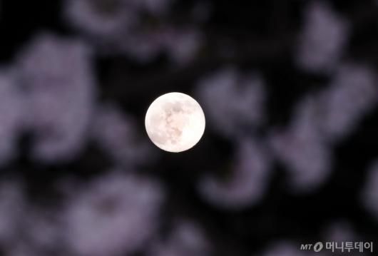 [사진]봄과 함께 '핑크 슈퍼문'