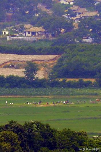 [사진]밭일하는 북한 주민들