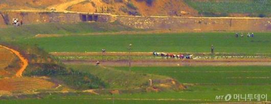 [사진]밭일하는 개풍군 주민들