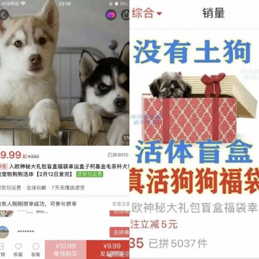상자 안에 넣어 랜덤 배송…中 인터넷서 팔리는 동물들의 '비명'