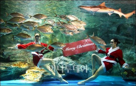 [사진]물속에서 전하는 '메리 크리스마스'