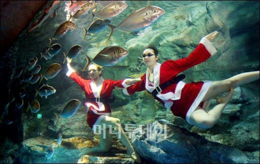 [사진]수중의 미녀 산타