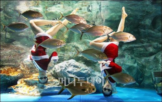 [사진]수족관속 산타와 물고기들