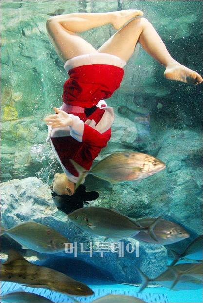 [사진]수중 발레하는 미녀산타