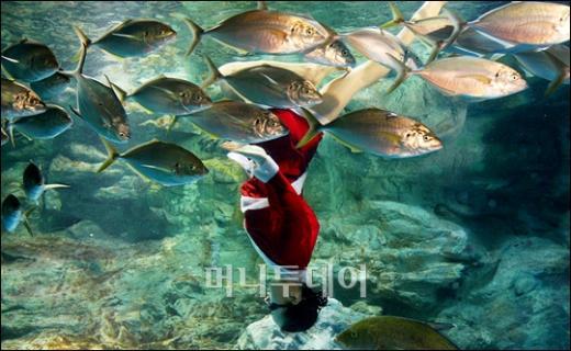[사진]물고기와 수중발레 하는 산타