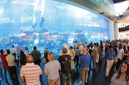 ↑ 세계 최대 규모의 수족관이 설치된 '두바이몰'의 아쿠아리움. 대형 수족관을 보기 위해 몰려든 관광객들이 유리창에서 눈을 떼지 못하고 있다.