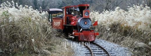▲곶자왈 기차