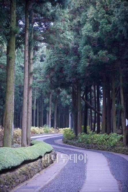 ▲장생의 숲길