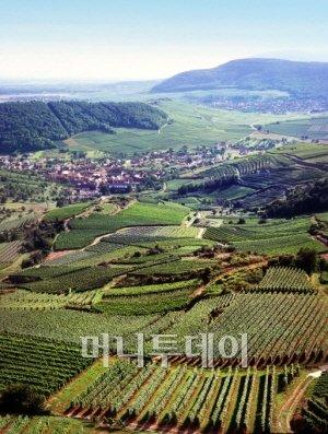 ⓒ 알자스 와인 생산자 협회(CIVA)