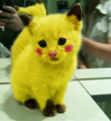 피카츄와 흡사한 모습의 고양이 사진을 두고 네티즌 사이에서 '동물 학대' 논란이 됐으나 포토샵 작업 사진인 것으로 드러났다. ⓒ레딧닷컴