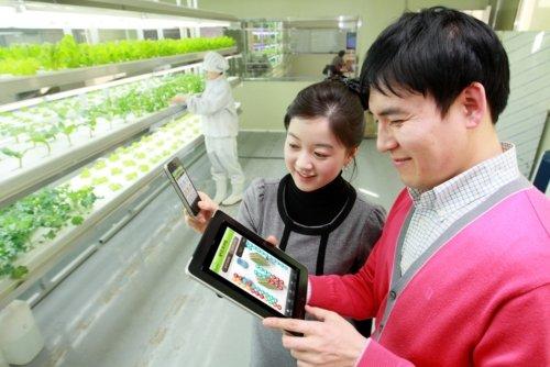 KT, 스마트폰으로 진짜 농작물 키운다