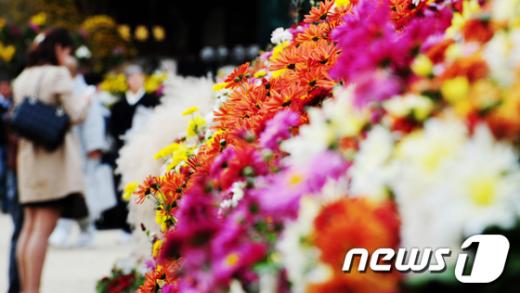 [사진]'국화꽃 향기'