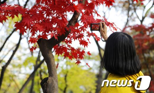 [사진]창경궁의 가을