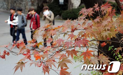 [사진]'가을의 끝자락'