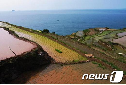 청산도 고유의농업 유산인 '구들장 논'. 바다와 어우러진모습이 환상적이다. /사진제공=완도군 News1