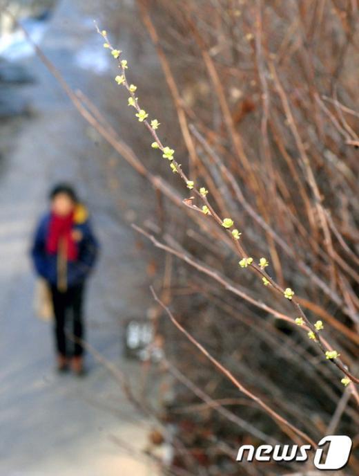 [사진]꽃샘추위 속 봄 기운