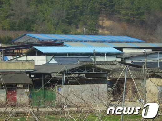 불법으로 건립된 B목장 전경 News1 이철우기자