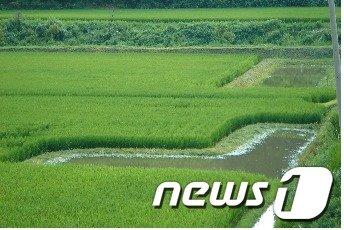 전남 강진군 옴천면 정정리 '둠벙'  News1