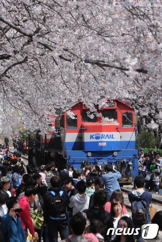 [사진]'벚꽃 속 기차'
