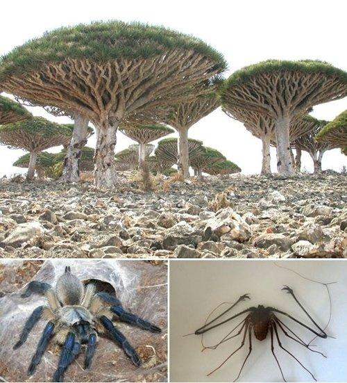 ▲예멘 소코트라섬의 동식물들 (사진=온라인 커뮤니티)