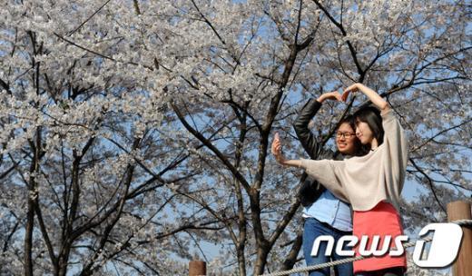 [사진]벚꽃과 하트