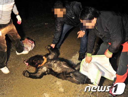 [사진]10시간 도주끝에 사살된 반달가슴곰