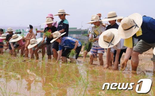 [사진]금천구, 친환경 주말농장에 모내기 체험