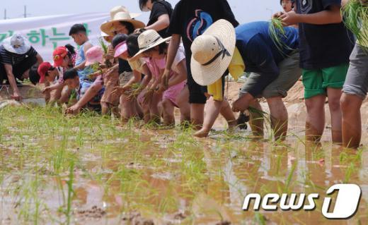 [사진]금천구, 친환경 주말농장 모내기 체험