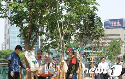 [사진]'가뭄으로 말라가는 나무를 살려라!'
