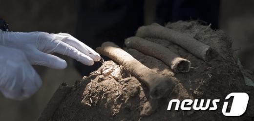 제62주년을 맞는 6.25한국전쟁을 엿새 앞둔 19일 오후 경기 용인시의 야산에서 국방부 유해발굴감식단이 6.25전쟁 전사자 유해를 발굴해 수습하고 있다. 2012.6.19/뉴스1  News1   이명근 기자