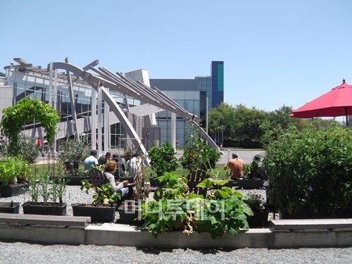 ↑ 미국 캘리포니아주 마운틴뷰의 구글 본사 직원들이 야외테이블에서 점심식사를 하고 있다. 직원 한 사람 한 사람, 업무 하나하나가 모두 소중하다는 철학이 구글을 인재의 보고로 만들었다.