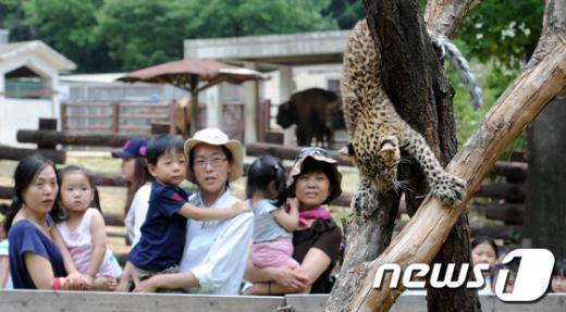 [사진]새끼표범 재롱보는 관람객들