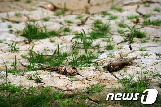 [사진]'죽음의 가뭄'