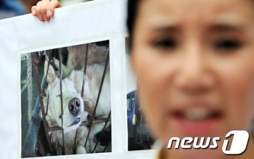 [사진]개악마 사건에 분노한 동물보호단체
