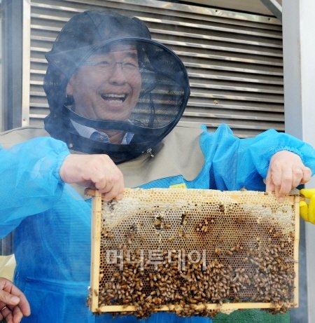 박원순 서울시장이 서울시청 옥상에 설치된 양봉장에서 꿀을 채취하고 있다. ⓒ뉴스1.