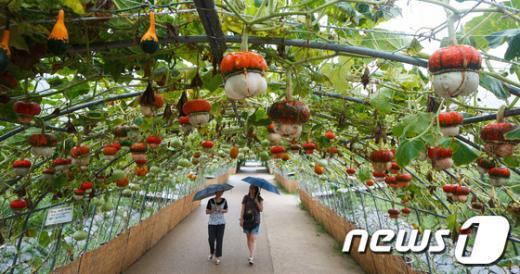 [사진]가을을 재촉하는 비
