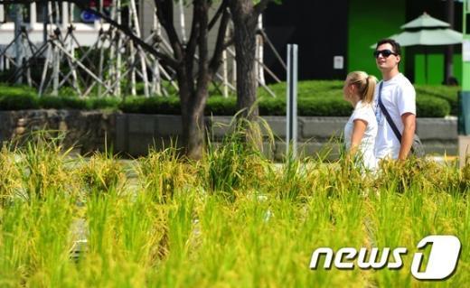 [사진]한국의 가을이 신기한 외국인 관광객