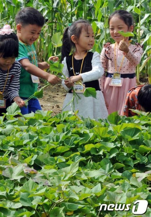 [사진]만져보고 느끼는 친환경농업
