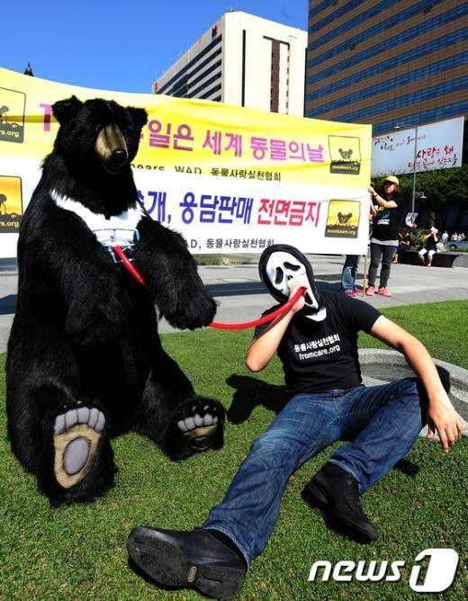 [사진]광화문 광장에 나타난 반달곰