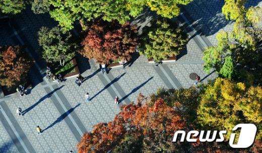 [사진]'가을로'