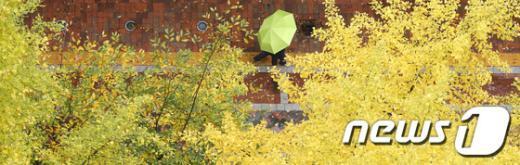 [사진]노란 우산과 노란 산책길