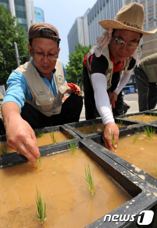 [사진]상자논에 벼모종 심는 서울시 관계자들
