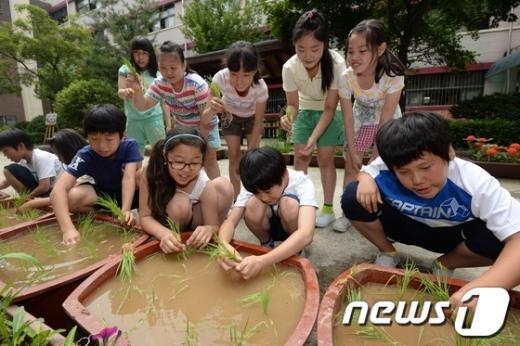 [사진]도시 어린이들의 친환경 모내기 체험