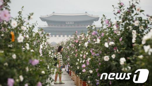 [사진]나라꽃 무궁화와 광화문