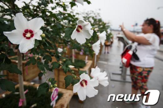 [사진]나라꽃 무궁화를 카메라에