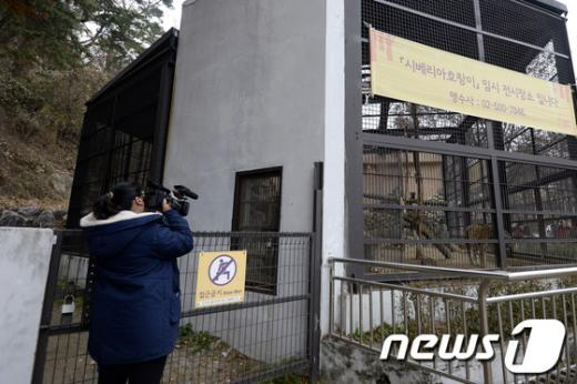 [사진]서울대공원 호랑이 탈출, 아찔한 사고