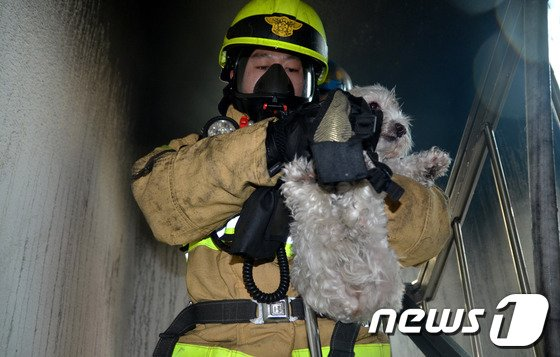 [사진]화재 현장에서 구출되는 강아지
