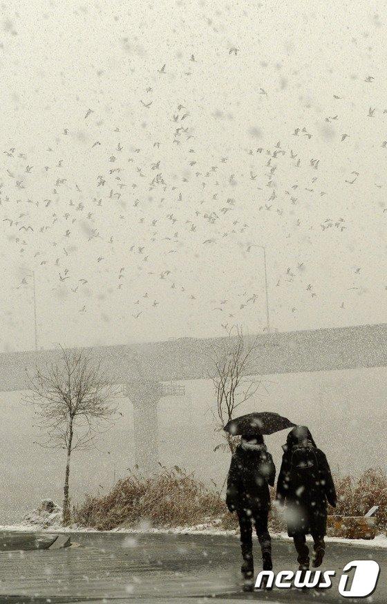 [사진]황사눈과 야생철새... '야외활동 주의'