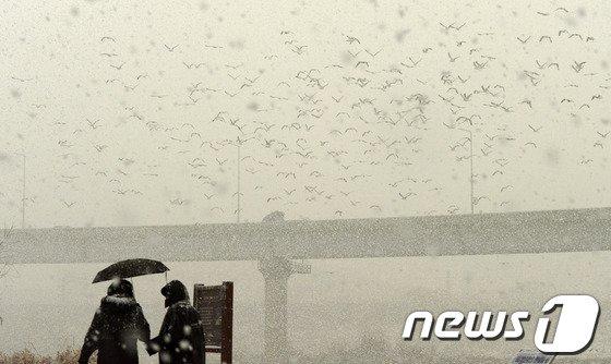 [사진]황사눈과 야생철새...야외활동 주의