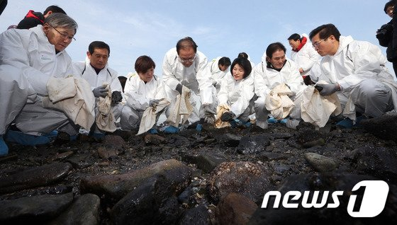 황우여 새누리당 대표와 의원들이 5일 전남 여수 신덕마을 기름유출 피해현장을 방문해 주민들과 함께 기름제거 작업을 하고 있다. 2014.2.5/뉴스1 © News1 허경 기자